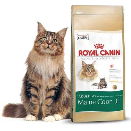 Hrana za mačke Maine Coon  Royal Canin